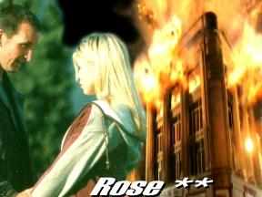 Rose **